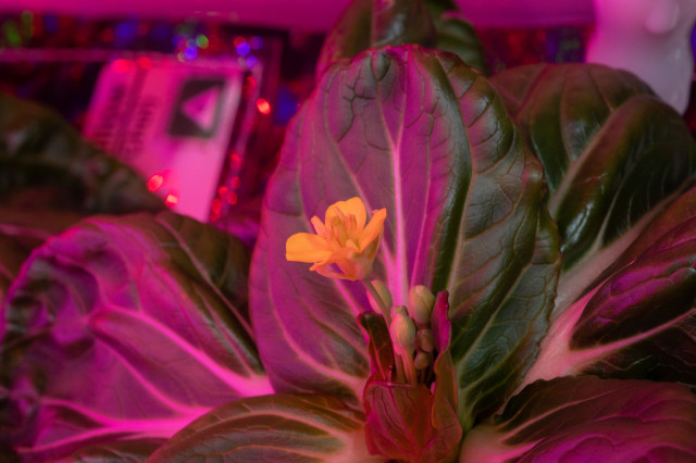 Constant Gardening on the Space Station